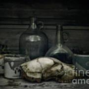 Still Life With Bear Skull Poster by Priska Wettstein