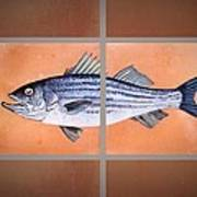 Striped Bass Poster by Andrew Drozdowicz