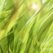 Summertime Green Poster by Ann Powell