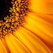 Sun Burst - Sunflower Poster by Martin Williams
