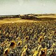 Sunflowers Field  Poster by Anja Freak