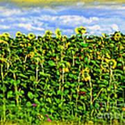 Sunflowers In France Poster by Joan  Minchak