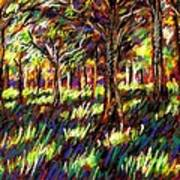 Sunlight Through The Trees Poster by John  Nolan