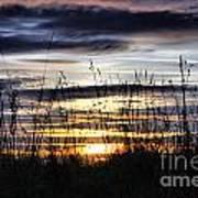 Sunset Grasses Poster by Sandra Cockayne