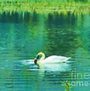 Swan Lake Poster by Judi Bagwell