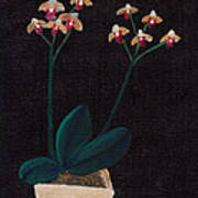 Table Orchid Poster by M Valeriano