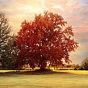The Healing Tree  Poster by Jai Johnson