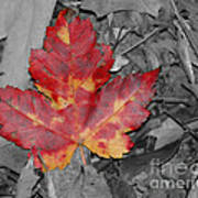 The Red Leaf Poster by Paul Ward