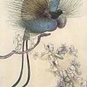 The Water Babies The Most Beuatiful Bird Of Paradise Poster by Warwick Goble