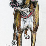 This Boxer Can Sing Poster by Deborah Willard