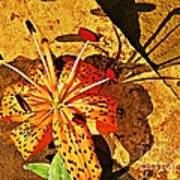 Tiger Lily Still Life  Poster by Chris Berry