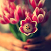 Tulips In Woman Hands Poster by Photo by Ira Heuvelman-Dobrolyubova