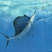 Two Of A Kind Sailfish Poster by Kevin Brant