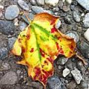 Vermont Foliage - Leaf On Earth Poster by Elijah Brook