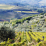 Vineyards And Olive Groves Poster by Jeremy Woodhouse
