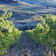 Vineyards Poster by Jeremy Woodhouse