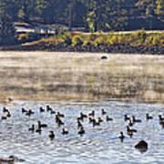 Water Fowl At Lake Wilhelmina Arkansas Poster by Douglas Barnard