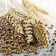 Wheat Ears And Grain Poster by Elena Elisseeva