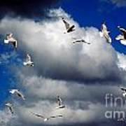 Wind Sailing Seagulls Poster by Vicki Ferrari