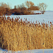 Winter Breeze Poster by Aimee L Maher Photography and Art Visit ALMGallerydotcom