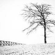 Winter In Black And White Poster by David Waldrop