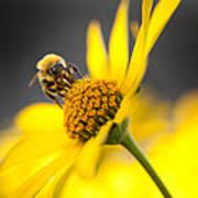Working Bee Poster by Pavlo Kolotenko