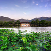 Xianghu - Lotus (xiaoshan) Poster by Andy Brandl