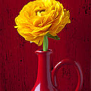Yellow Ranunculus In Red Pitcher Poster by Garry Gay