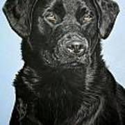 Young Black Labrador Poster by Lucy Swinburne