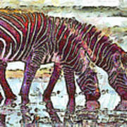 Zebras Poster by George Rossidis