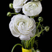 White Ranunculus In Yellow Vase Poster by Garry Gay