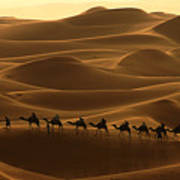 Camel Caravan In The Erg Chebbi Southern Morocco Poster by Ralph A  Ledergerber-Photography