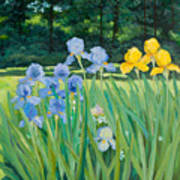 Irises In The Garden Poster by Betty McGlamery