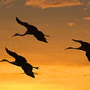 Sandhill Cranes At Dusk Poster by Larry Linton