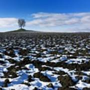 Winter Tree. Poster by Bernard Jaubert