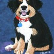 Burmese Mountain Pup Poster by Michele Turney