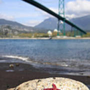 Starfish Stanley Park Vancouver Poster by Pierre Leclerc Photography