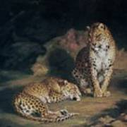 A Pair Of Leopards Poster by William Huggins