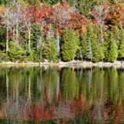 Acadia Tree Reflections Poster by Alexander Mendoza