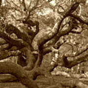 Angel Oak In Sepia Poster by Suzanne Gaff