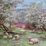 Appleblossom Poster by William Biscombe Gardner
