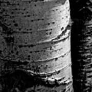 Aspen Abstract Poster by The Forests Edge Photography - Diane Sandoval