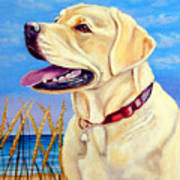 At The Beach - Labrador Retriever Poster by Lyn Cook