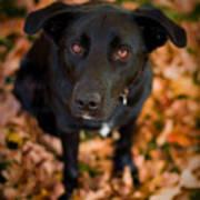 Autumn Dog Poster by Adam Romanowicz