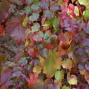 Autumn Ivy Poster by Jessica Rose