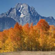 Autumn Splendor In Grand Teton Poster by Sandra Bronstein