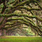 Avenue Of Oaks - Charleston Sc Plantation Live Oak Trees Forest Landscape Poster by Dave Allen