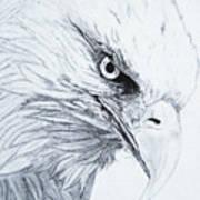 Bald Eagle Poster by Nancy Rucker