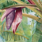 Banana Flower Poster by AnnaJo Vahle