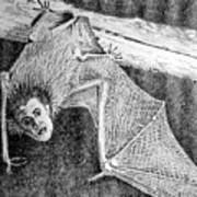 Bat Man Poster by Arline Wagner